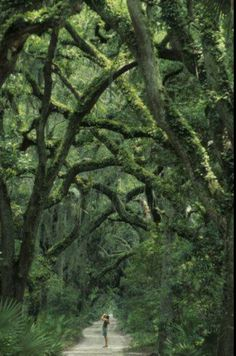 cumberland island, georgia. photo by michael melford...one of my favorite places to wander around