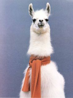 I just want a grinning scarfed llama. Is that really too much to ask?