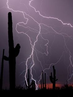 Tucson Lightning | Photo: Lightning strikes the horizon behind saguaro cacti