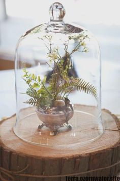 Wedding Terrarium Centerpiece -- petite fern arrangement on top of a tree slice, covered by a glass cloche Terrarium Wedding Centerpiece, Rustic Wedding Centerpieces, Wedding Rustic, Wedding Decor, Diy Wedding, Wedding Flowers, Centrepiece Ideas, Diy Centerpieces, Centrepieces