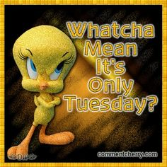 Tweety on Tuesdays ;)