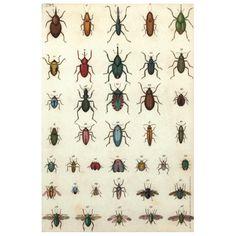 John Derian Company Inc — Jeweled Insects