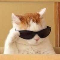 Cute Cat Memes, Funny Cute Cats, Cute Baby Cats, Cute Little Animals, Cute Funny Animals, Cool Cats, Chat Bizarre, Meme Chat, Gatos Cool