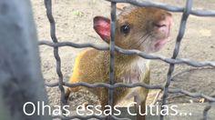 Passeios no Rio: Lapa, Grutas e Central do Brasil!