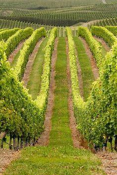 breathtaking view...www.tuscanywinefoodadventures.com