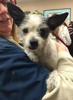 #A476936 Rescue only (fearful-may bite) Release only to rescues on 12/26 I am a female, white and black Terrier mix. Shelter staff think I am about 4 years old. I have been at the shelter since Dec 15, 2014. City of San Bernardino Animal Control-Shelter. https://www.facebook.com/photo.php?fbid=10204145359571803&set=a.10203202186593068&type=3&theater