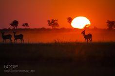 Red by cfischerphoto #animals #animal #pet #pets #animales #animallovers #photooftheday #amazing #picoftheday