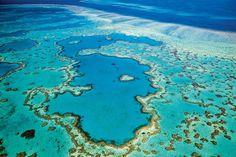 Tasmania, Brisbane, Costa, Tropical, Fauna, Places To Go, Australia, River, World