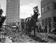 Bring back the WWII-era victory garden Urban Agriculture, Urban Farming, Dig For Victory, Fake Turf, San Francisco, Land Girls, Victory Garden, Smart City, Modern History