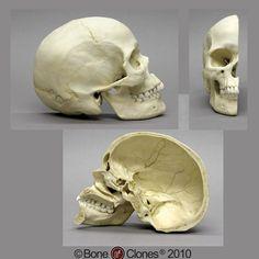 inside a skull