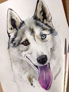 Hasky. Watercolor. Artist- Elenn Freya. Sketch Inspiration, Husky, Paintings, Watercolor, Dogs, Artist, Animals, Pen And Wash, Watercolor Painting