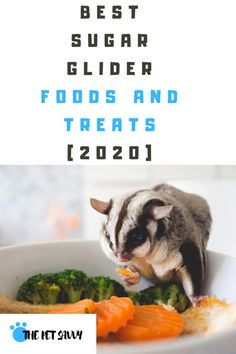 Sugar Glider Care, Sugar Glider Food, Sugar Glider Pouch, Sugar Gliders, Guinea Pig Toys, Guinea Pigs, Diy Projects That Sell Well, Sugar Bears, Rabbit Cages