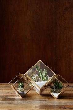 Truly amazing miniature gardens, terrariums are great for people who don't have enough garden space. Here are 5 easy steps on how to make a terrarium. Terrarium Cactus, Glass Terrarium, Small Terrarium, Glass Planter, Deco Floral, Cactus Y Suculentas, Cactus Flower, Décor Cactus, Small Cactus Plants