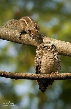 "SQUIRREL: "" How's it goin' owl;"" OWL: "" Praise does wonders fer de sense of hearing. Animals And Pets, Baby Animals, Funny Animals, Cute Animals, Wild Animals, Beautiful Owl, Animals Beautiful, Photo Animaliere, Tier Fotos"