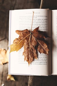 Enjoy the rainy days to immerse yourself in a The post Enjoy the rainy days to immerse yourself in a & & autumn scenery appeared first on Trendy. Leaf Book, Autumn Scenery, Tis The Season, Rainy Days, Fall Halloween, Cute Wallpapers, Autumn Leaves, Iphone Wallpaper, Nature Wallpaper