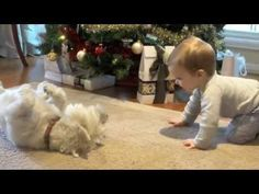 Puppy Love! Baby & Dog playing & laughing! #westie