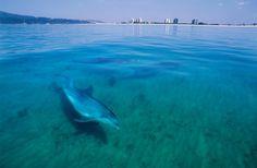 Arrábida, Setúbal  The dolphins in Sado River  Portugal