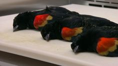Dead birds in Sweden killed by 'external blows' - CNN.com