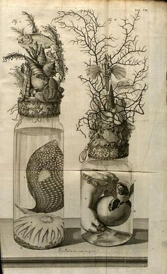 amazing botanical fauna drawing Inkspiration