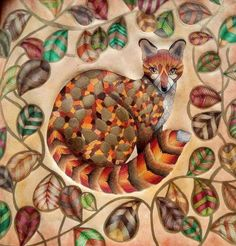 Millie Marotta Mandala Coloring Book For Adult Wild Savannah Find This Pin And More On Curious Creatures