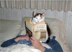 Cats Doing What They Do Best (13 Photos)