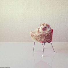 The cutest IG feed ever @darcytheflyinghedgehog