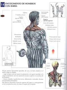 Entrenamiento de hombros y trapecio