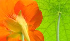 Bright green and orange photography