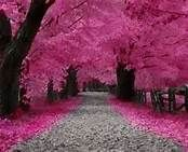 ireland pink forest - Bing Images