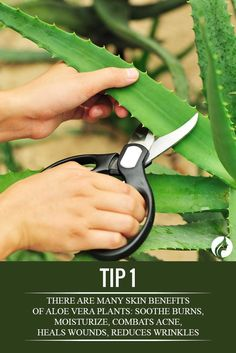 Amazing Aloe Vera Plant Uses ★ See more: http://glaminati.com/amazing-aloe-vera-plant-uses/