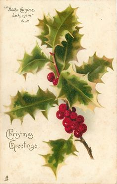 """Christmas Greetings ~ holly with white edges. Quote: """"Blithe Christmas back again."""" ~ Scott"""