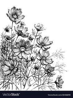 Cosmos flowers hand drawing garden background vector image on VectorStock Flower Garden Drawing, Flower Line Drawings, Flower Drawing Tutorials, Flower Sketches, Flower Art, Daisy Drawing, Drawing Flowers, Bullet Journal Boxes, Wildflower Drawing