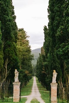 romantic Italian hills // photo by Cinzia Bruschini (Favorite Pins Olive Gardens)