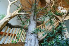Image looking up at beautiful tree in your office space | Artisan Log Homes