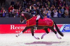 Charlotte & Valegro extended trot... amazing. | Horses | Pinterest