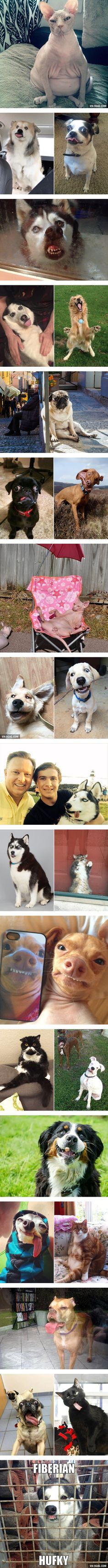 Not All Pets Are Photogenic… - 9GAG