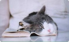 cat learn sleep on book