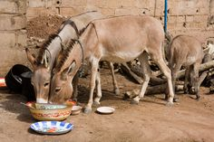 donkeys - Google Search
