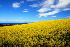 『2009菜の花フェスティバルinよこはま』直前の雪景色 -青森県横浜町- : JAZZの普段着写眞館