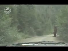 Real Bigfoot, Finding Bigfoot, Bigfoot Sasquatch, Bigfoot Footage, Bigfoot Documentary, Motion Activated Camera, Bigfoot Pictures, Pie Grande, Bigfoot Sightings