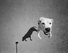 Unleashing Dogs' Inner Spirits in Photographs of Their Shadows Thomas Roma, from Plato's Dogs (2016)