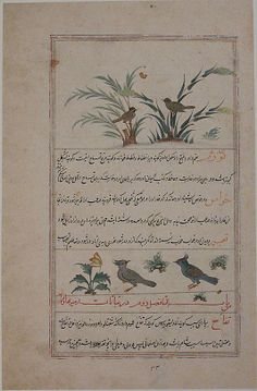 Folio from a Bestiary and Herbal Date: ca. 1600 Geography: Iran, Isfahan Medium: Opaque watercolor and gold on paper Dimensions: H. 13 1/16 in. (33.2 cm) W. 8 9/16 in. (21.7 cm) Metropolitan Museum of Art 65.271.5
