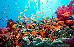 Sharm El Sheikh – Tennis time…diving and looking for the coral reef Places To Travel, Places To Visit, Marine Fish Tanks, Sharm El Sheikh, Red Sea, Holiday Travel, Wonders Of The World, Art Inspo, Adventure Travel