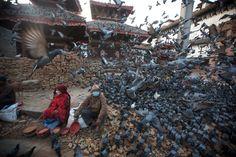 03.05 Des pigeons s'envolent sur la place Durbar, au Népal. L'endroit a été détruit par le séisme qui a secoué Katmandou.Photo: AFP/Menahem Kahana