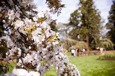 Ballarat Gardens in Spring