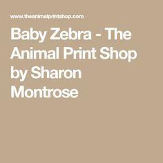 Baby Zebra - The Animal Print Shop by Sharon Montrose