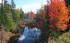 Patricia and David Betts sent in this photograph taken on the Six Mile Road in Cumberland County, northern Nova Scotia, Canada. The photo was taken last week while we were driving around the countryside admiring the beautiful autumn (Fall) colours.  Picture: Patricia and David Betts
