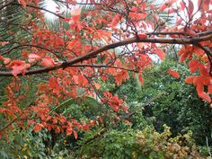 Ada's country life: Autumn in the garden