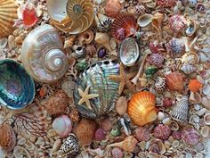 sea stars and shells, what dreams are made of...