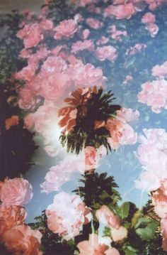 photographic florals with palm tree Tropical Vibes, Mood, Double Exposure, Cute Wallpapers, Collage Art, Deco, Pretty In Pink, Flower Power, Art Photography